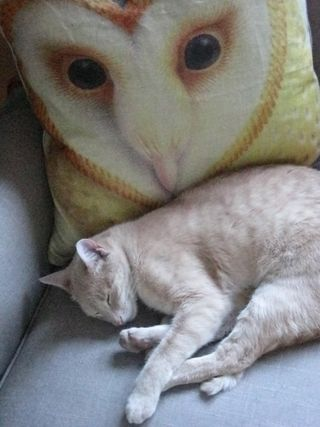 Murphy and owl pillow