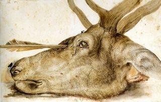 Dead durer deer