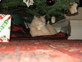 Close up Murphy under tree