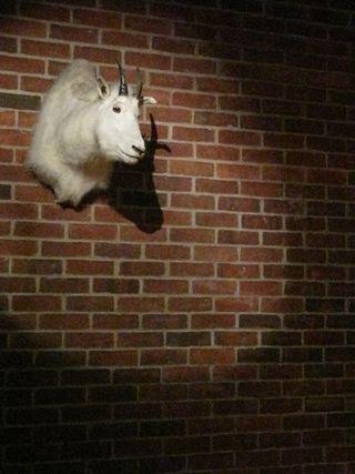 Hudson Hotel Goat