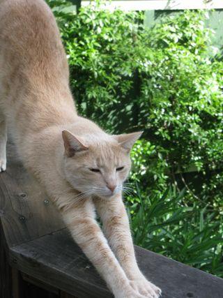 Murphy stretching