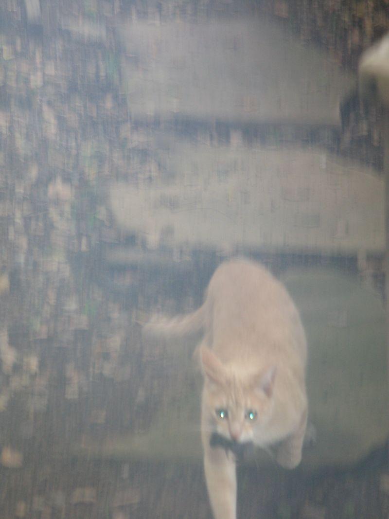 Murphy blurry prey