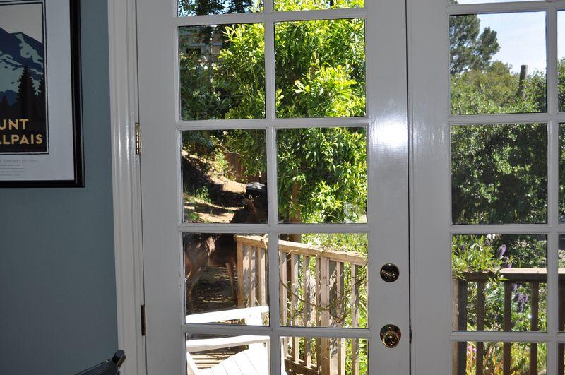 Deer at the door