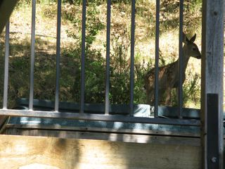 Fawn on hot tub
