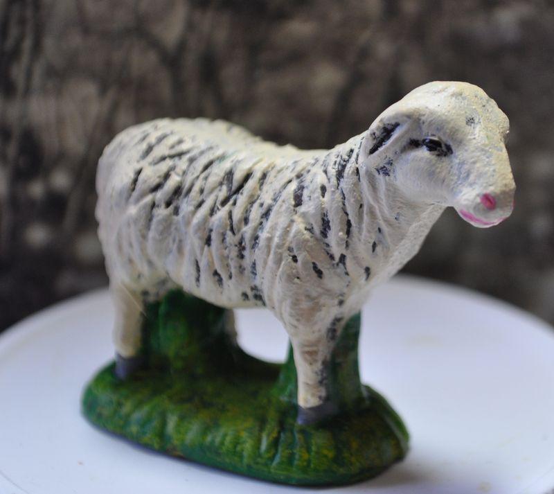 Sheep 616