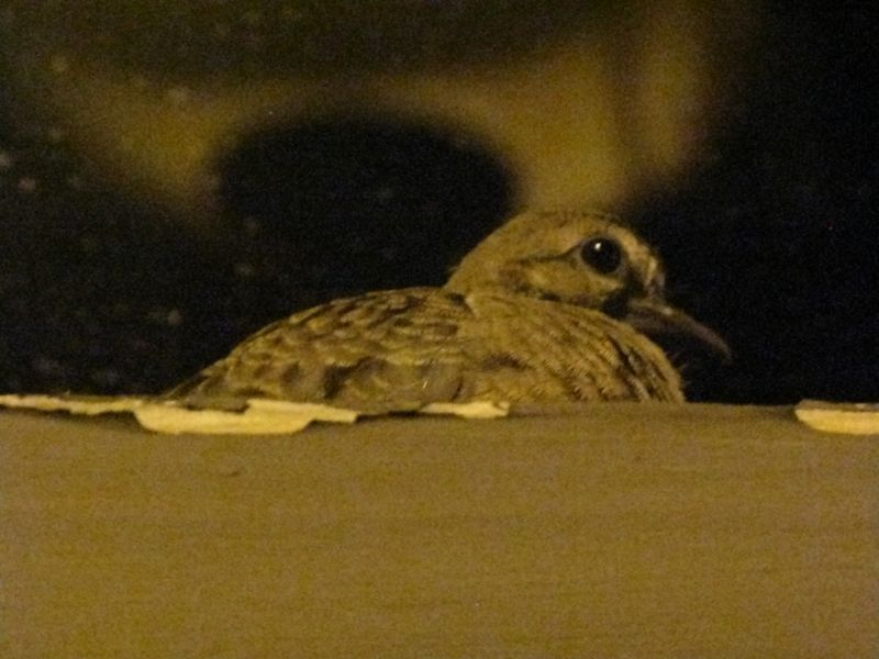 Nigth bird nesting