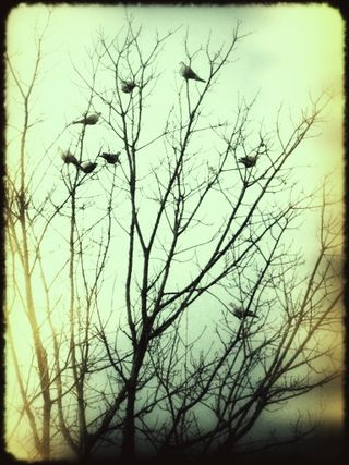 Mississippi birds