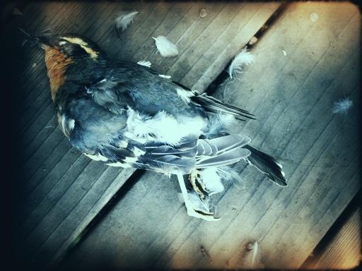 Dead Robin February