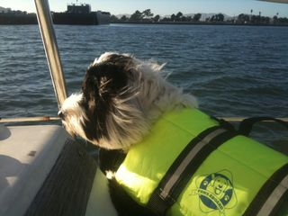 Trixie on the boat 2
