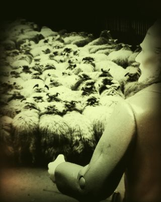 Freud and a flock of sheep